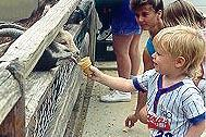 feeding the goats at Henry Vilas Zoo